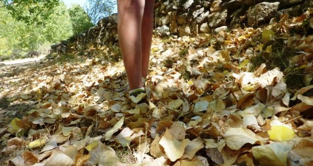 recorrido cubierto por un manto de hojas